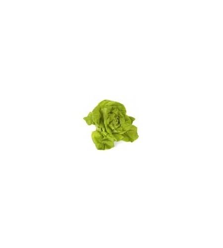 Salade Batavia ou Feuille de chêne ou Laitue